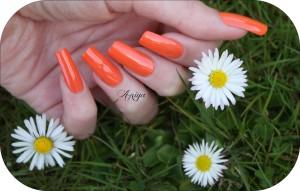 lm poppy flower2